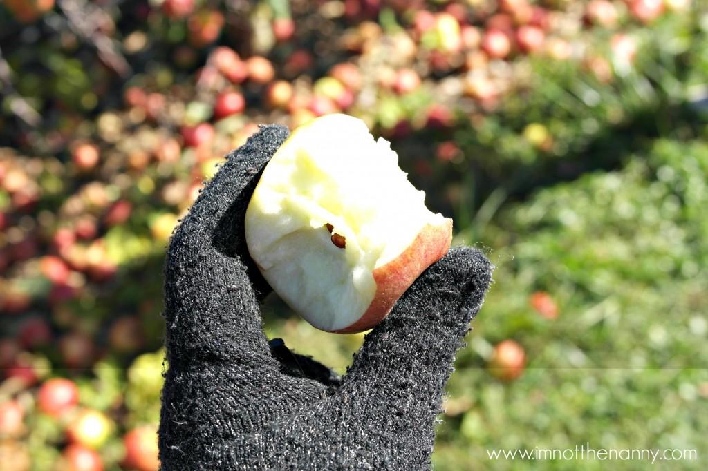 Larriland Farm Apple Picking - I'm Not the Nanny