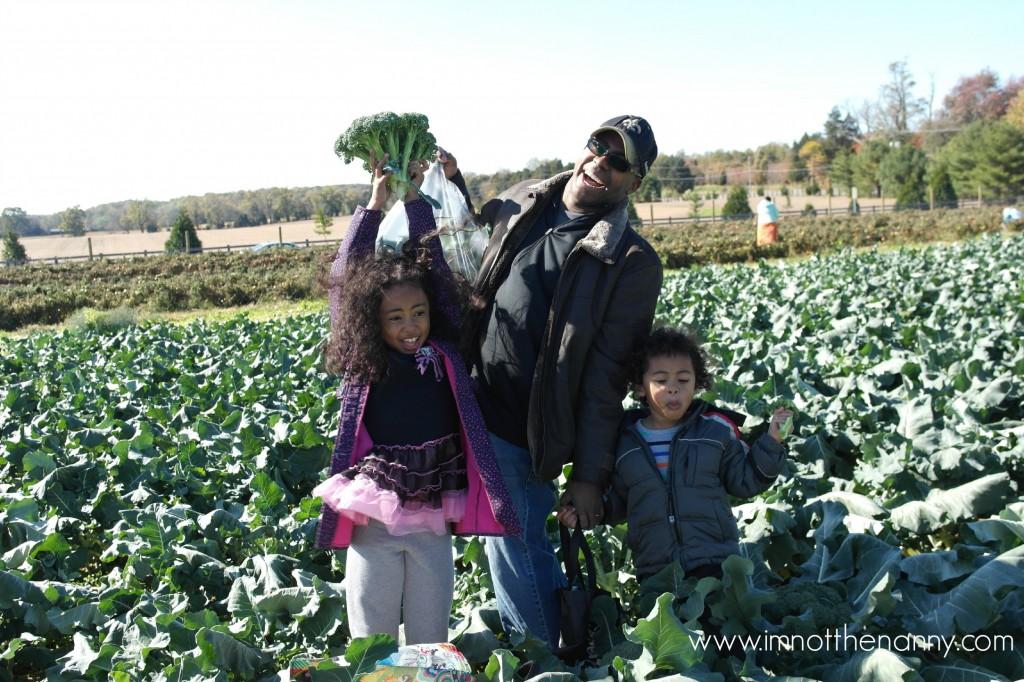 Larriland Farm Broccoli Picking