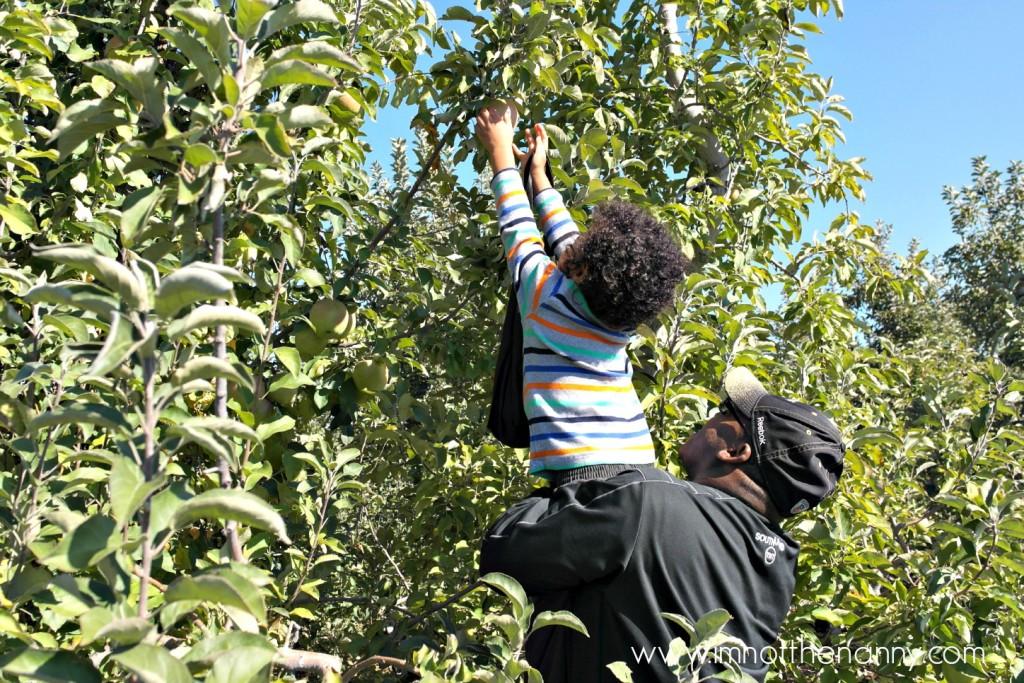 Larriland Farm Apple Picking Jaxson - I'm Not the Nanny
