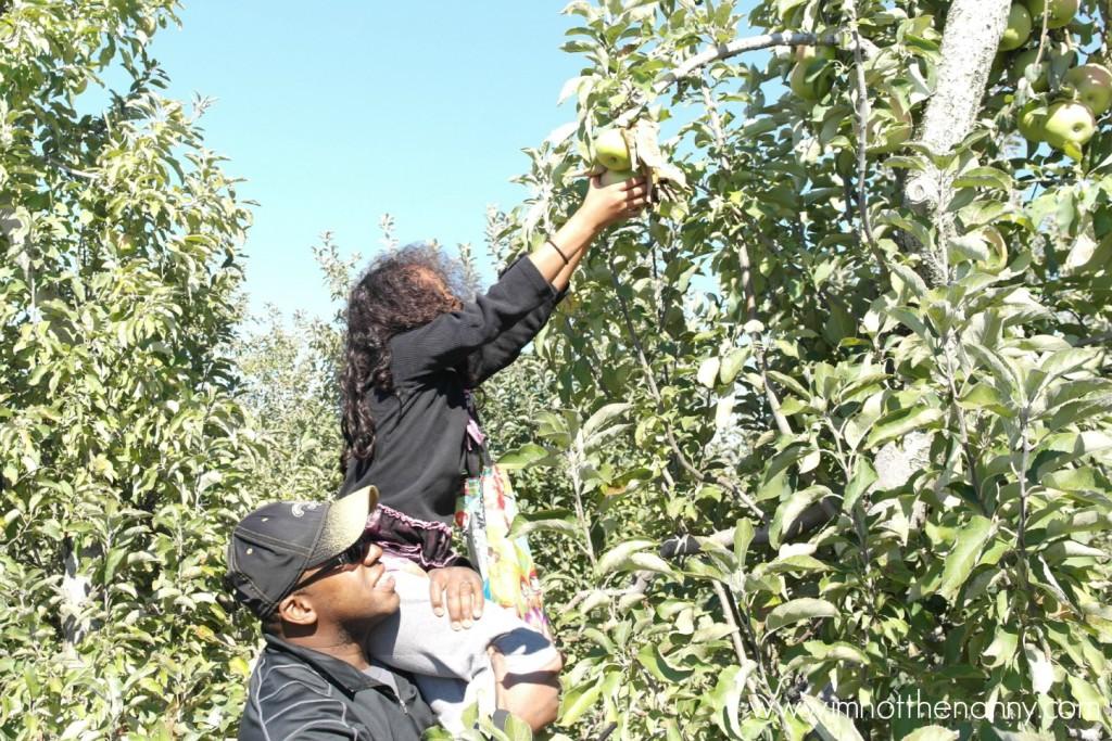 Larriland Farm Apple Picking Sophia -I'm Not the Nanny