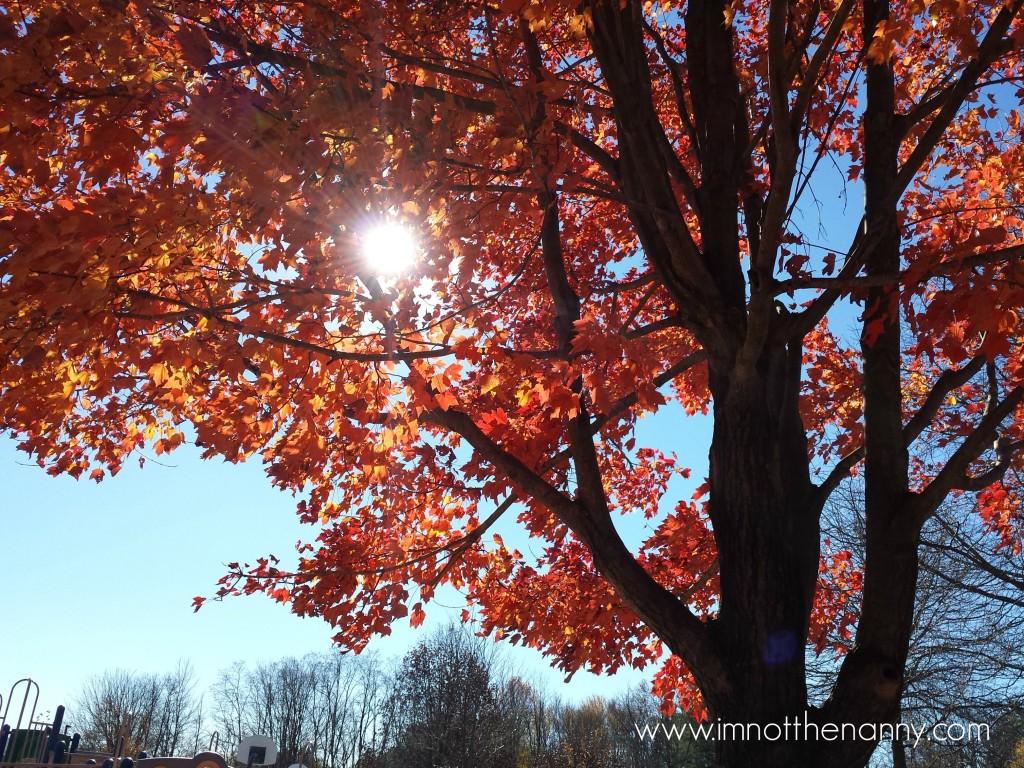 Sun through fall foliage leaves