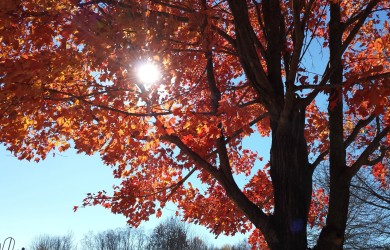 Sun through fall foliage leaves