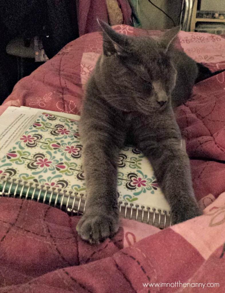 My cat loves my Erin Condren planner too.