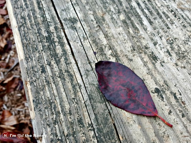 Red Mottled leaf at park