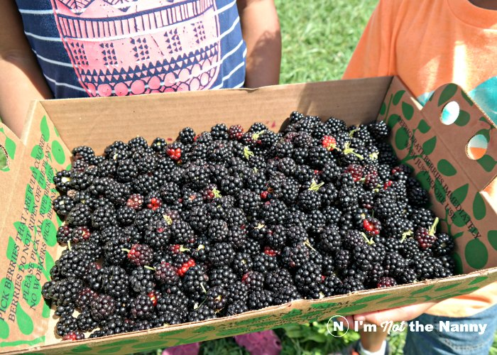 Our Blackberry Haul